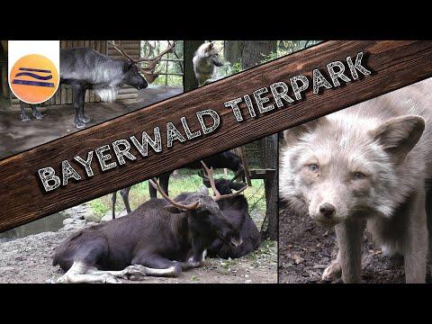 Bayerwald Tierpark | Tierische Highlights | Lohberg | Bayerischer Wald