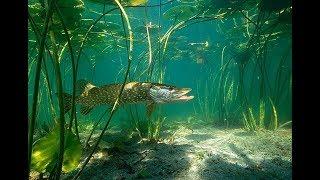 Озера карельского перешейка где запрещена ловля рыбы