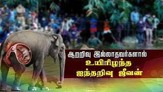 #ElephantKilled || #Kerala || #PolimerNews  பசியுடன் வந்த யானையை வெடி வைத்து கொன்ற கொடூரம்    கர்ப்பிணி யானை ஆற்றில் நின்றபடி உயிரிழந்த பரிதாபம்   அடையாளம் தெரியாத நபர்கள் மீது வனத்துறை வழக்குப்பதிவு  Watch Polimer News on YouTube which streams news related to current affairs of Tamil Nadu, Nation, and the World. Here you can watch breaking news, live reports, latest news in politics, viral video, entertainment, Bollywood, business and sports news & much more news in Tamil. Stay tuned for all the breaking news in Tamil.