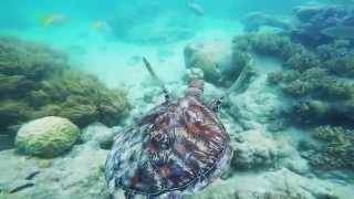 Green Island Snorkeling, Cairns QLD, Great Barrier Reef, Australia
