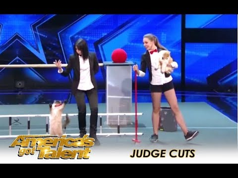 The Savitsky Cats: The Most TALENTED Cats You Won't Believe It! | America's Got Talent 2018 (видео)