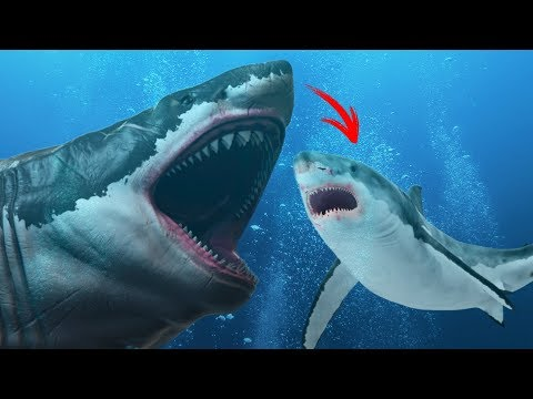 Did the Megalodon Evolve Into the Great White?