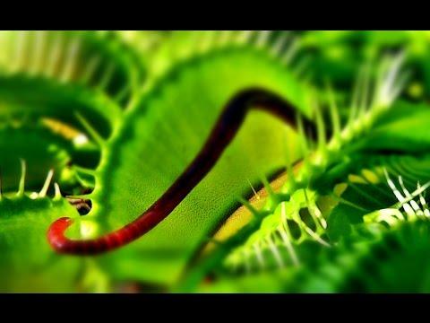 Der Würmer beim Kater zu träumen