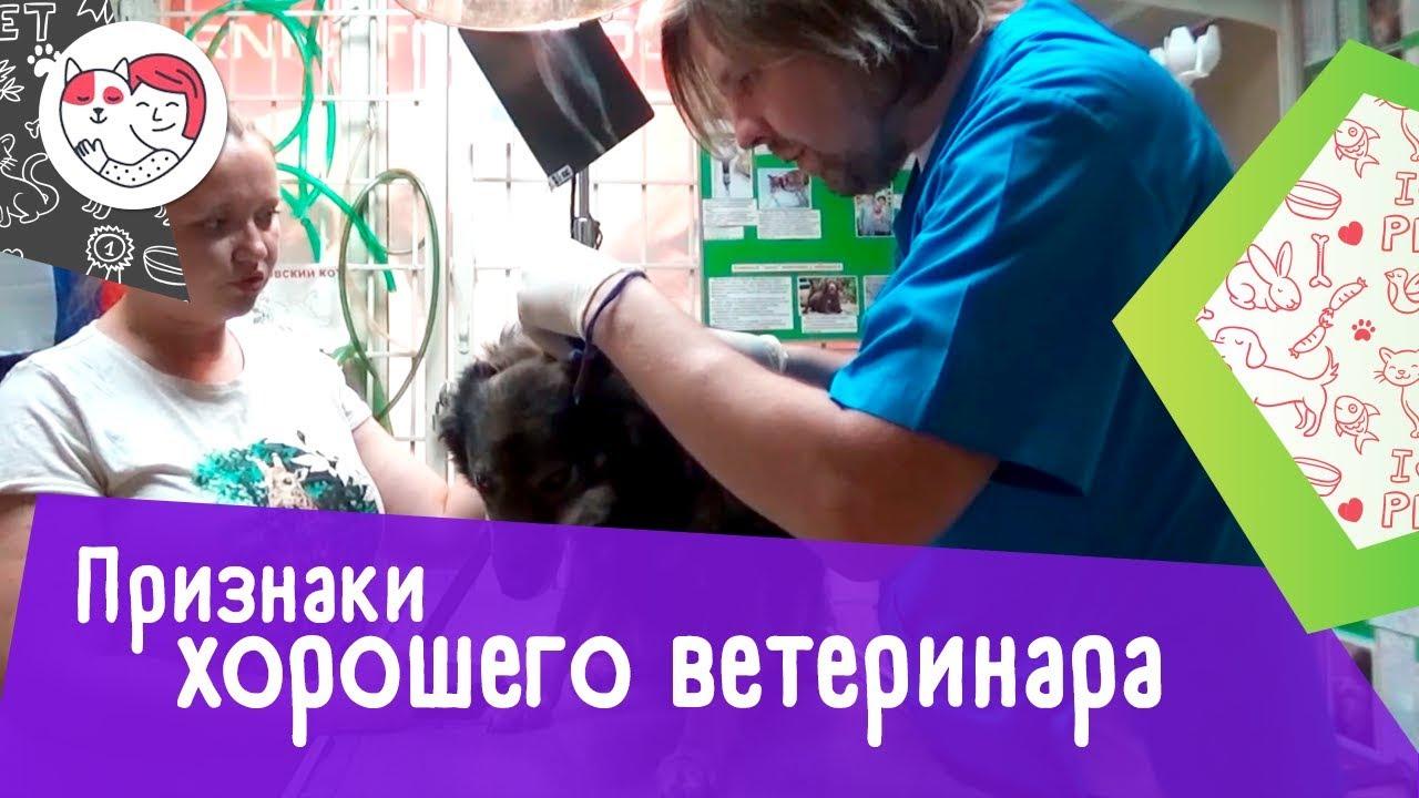 5 признаков хорошего ветеринара