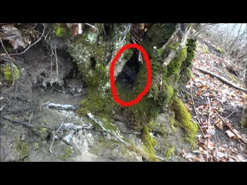 ГОБЛИН ПОПАЛО НА КАМЕРУ В ЛЕСУ странное существо снятое 2019 г. неизвестное существо. гном в лесу