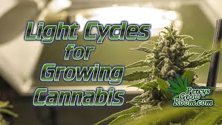 Light Cycles for Growing Cannabis, Fully Explained