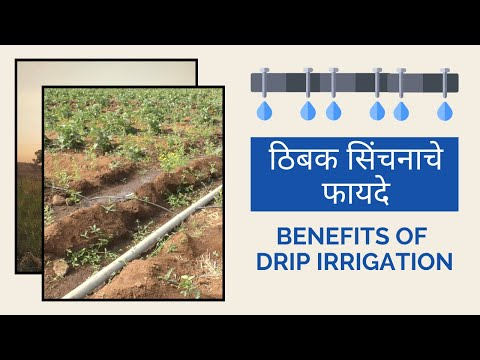 Drip Irrigation Explained