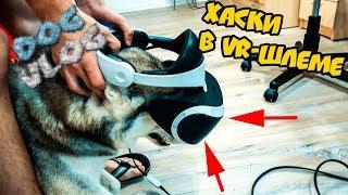 DOGVLOG: ЧТО БУДЕТ ЕСЛИ на ХАСКИ ОДЕТЬ VR-ШЛЕМ? Говорящая собака