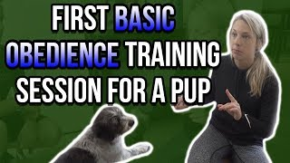 FIRST BASIC OBEDIENCE TRAINING SESSION FOR A PUPPY