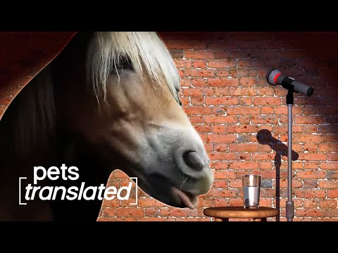 Animals Got Talent | Pets Translated