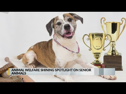 Campaign shines light on senior animals in need of a home, in light of Senior Games