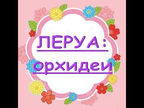 """Леруа:ПОТРЯСАЮЩИЙ завоз ОРХИДЕЙ,19.09.20.Т""""Космопорт"""",Самара."""