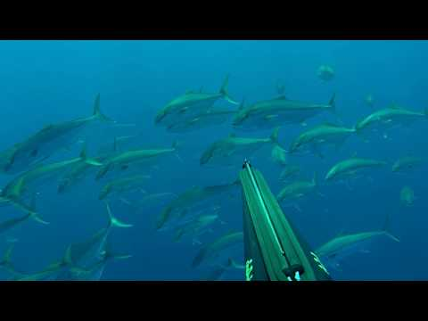Spearfishing Corfu - Great Amberjack