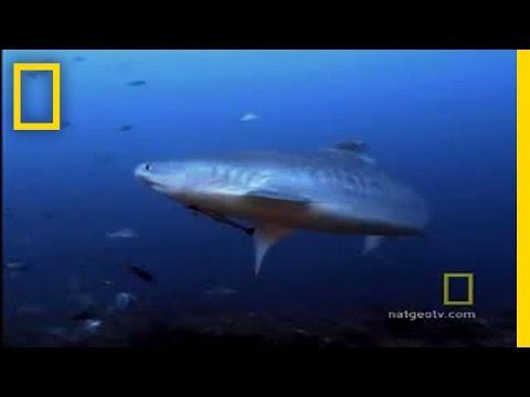 Jak přežít: žralok