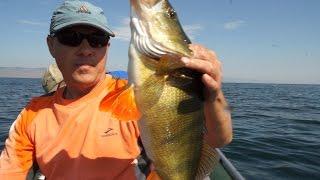 Рыбалка на гусином озере приозерский район