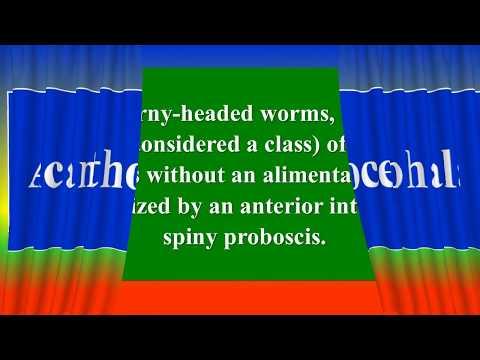 Parazitak diagnosztizalasa es kezelese