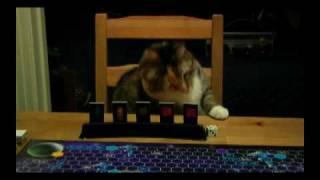 Поиграть в Star Trek с кошкой