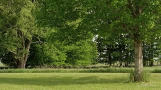 Krásná Keltská hudba Relaxační s Natural Sounds odpočinek, spánek, lázní, meditace