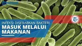 Listeria, Infeksi Disebabkan Bakteri yang Masuk ke Tubuh Melalui Makanan yang Dikonsumsi