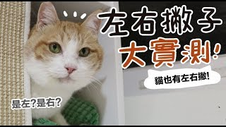 【黃阿瑪的後宮生活】左右撇子大實測!貓也有左右撇!