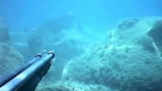 Cefali e un barracuda