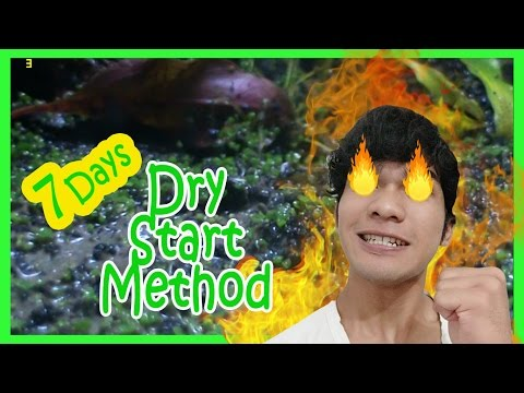 Video DIY Cara Buat Aquascape Dry Start Method (DSM) - K Gallery
