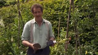 Gardening Advice Episode 12 - How To Grow Chrysanthemums