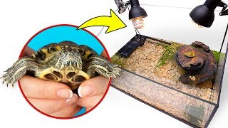 Assembling Turtle Terrarium For Two Cute Red Eared Turtles