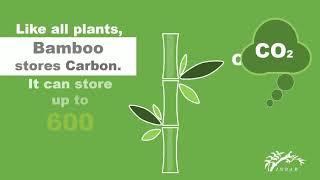 ThinkBamboo – Bamboo for Sustainable Developmentrea interés