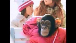 Phim hài Nhật Bản - Chó & Khỉ thông minh phần 1 - Tập 9 [HD]
