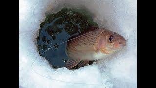 Хариус рыбалка ловля