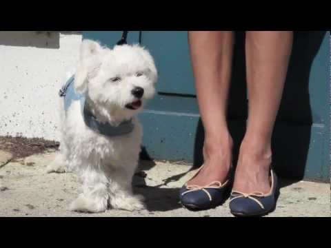 CUTEST PUPPY EVER! - Luxy's Shoe Haul