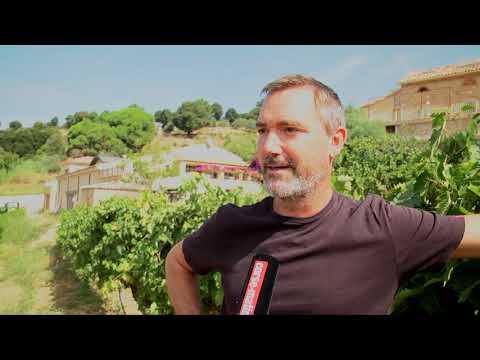 VIDEO. Clos d'Alzeto, des vendanges familiales depuis cinq générations