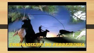 COMPANHEIRO DO FERREIRINHA**TIÃO CARREIRO E PARDINHO-Compositores- PINHEIRINHO / GERALDO GALDINO.