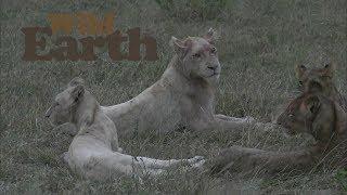 WildEarth - Sunset Safari - 1 April 2020