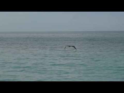 La pesca su piccolo fritto su una verga di galleggiante di video