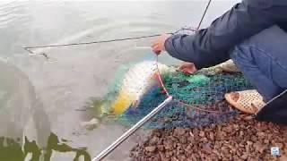 Câu cá không cần mồi - nháy phao là giật, không sảy con nào