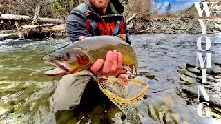 CUTTTHROAT TROUT AND GRIZZLIES (Fly Fishing Wyoming's Backcountry)