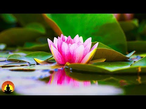 🔴 Relaxing Music 24/7, Meditation, Healing, Sleep Music, Yoga, Spa, Calming Music, Relax, Study