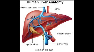 How TEST Important Liver Values Albumin, ALT, ALP & AST