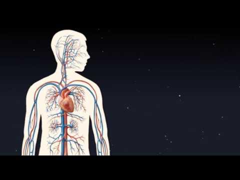 Stężenie ATP w mięśniu w spoczynku