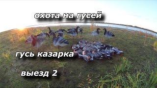 Как ловить на казарку