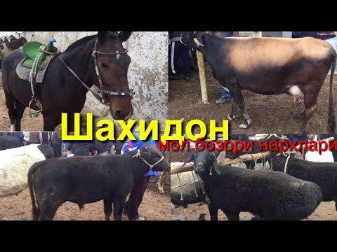 Шахидон мол бозори нархлари 16- октябрь