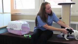How to care for your kitten so they become a happy, friendly and well-behaved cat.