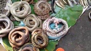 ตลาดเช้าของแปลก ๆ สด ๆ งู หนู เขียด แมลง ปลามากมาย Battabang Animal Fresh Market