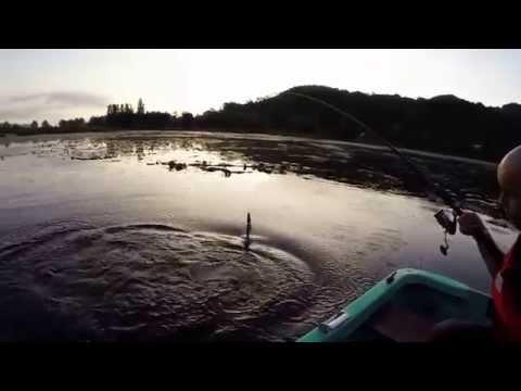 La pesca sul merluzzo di video di Mare Bianco