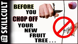 Before You Cut Back Your New Fruit Tree, Watch This! Training By Notching And Dis-budding & Pruning