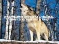 Et l'homme inventa l'animal - 1/2 - Au début était le loup