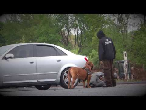 "MAN VS BEAST ""AMAZING!!!!"" POLICE PITBULL ATTACK  worlds best manstopping protection dogs!!"