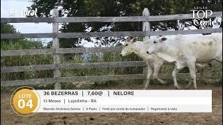 36 BEZERRAS NELORE
